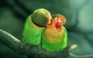 love birds - Relationship Coaching